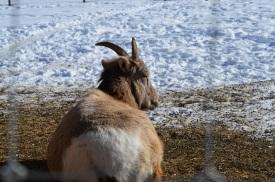 Affordable Vacation in Whitehorse   Yukon   Canada   Travel Adventures   Larkycanuck.com