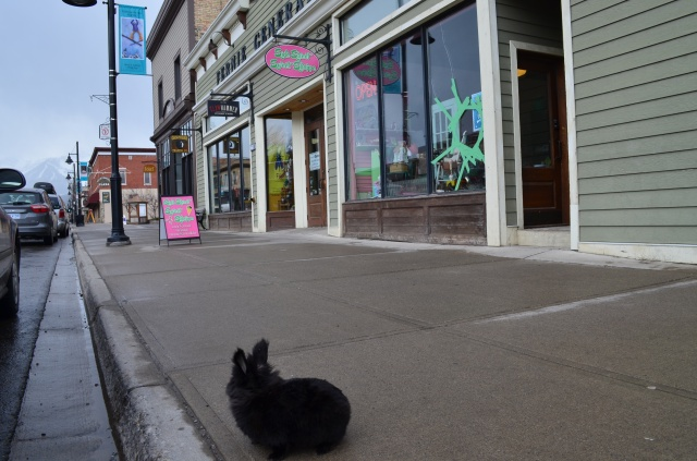 Pepper, a Calgary bunny, visits Fernie | British Columbia | Canada | Travel Adventures | Larkycanuck.com