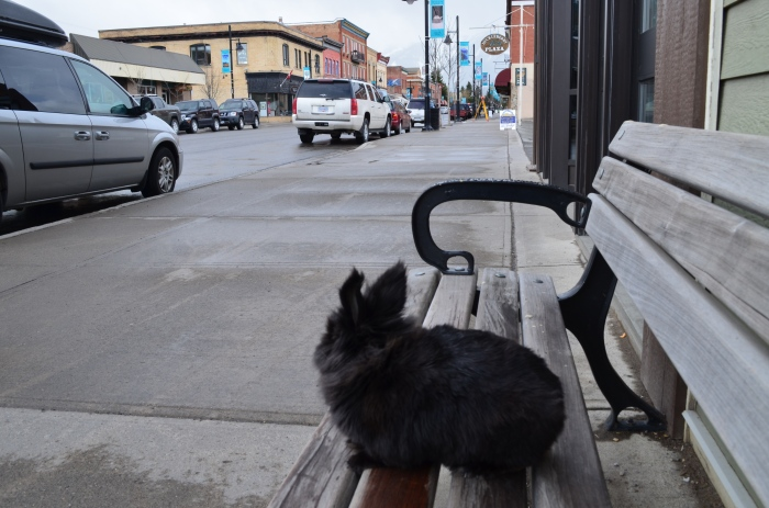 Pepper, a Calgary bunny, visits Fernie | British Columbia | Canada | Travel Adventures | Larkycanuck.com