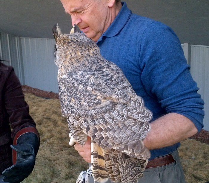 Coaldale Birds of Prey Foundation | Alberta | Canada | Travel Adventures | larkycanuck.com