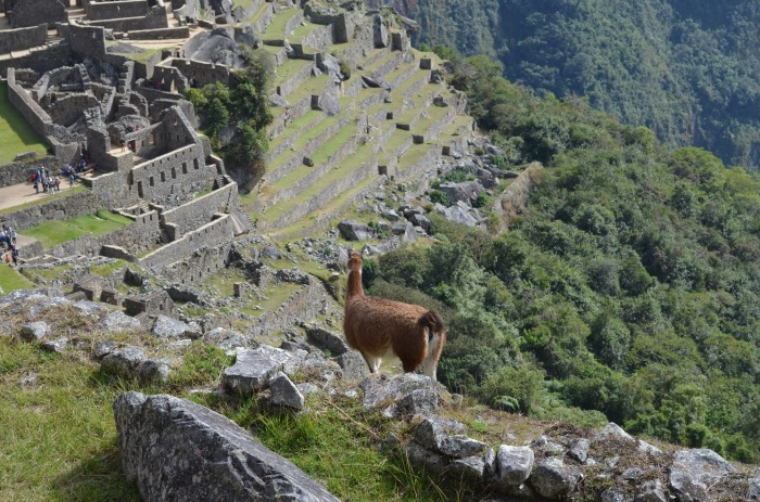 Hiking Machu Picchu and Pisac ruins | Affordable Adventure Travel
