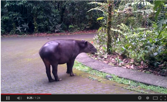 Costa Rica Rainforest Vacation Adventure Toure  Budget Adventure Travel